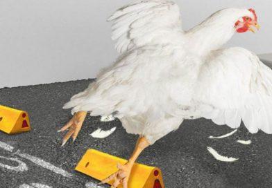 """""""Pollo a la poblana"""", los mejores memes que nos dejó la publicidad de Bachoco"""