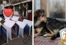 Jóvenes convierten propaganda electoral en casas para perritos abandonados